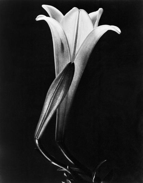 Gigli, Messico, 1925 Tina Modotti Archivio Fotografico Cinemazero Images, Fondo Tina Modotti
